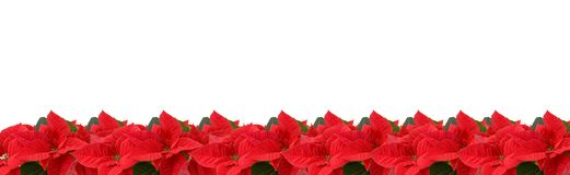 Border of red poinsettia Royalty Free Stock Photos