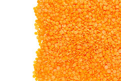 Border of red purified lentil closeup with copy space on white background. Royalty Free Stock Photos