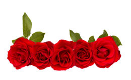 Border of red  roses Royalty Free Stock Photos
