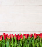 Border of Red Tulip Flowers Royalty Free Stock Photo