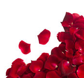 Border of  rose petals Royalty Free Stock Photos