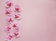 Border of rosy orchid flowers on pink background. Place for text Royalty Free Stock Image
