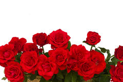 Border of scarlet roses Stock Image