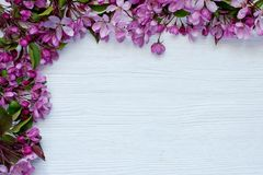 Border  from spring apple tree flowers on  wooden background Royalty Free Stock Photo