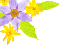 Border of spring flowers Stock Photography
