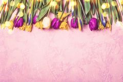 Border of spring multicolored tulips and daffodils Royalty Free Stock Photo