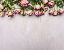 Border, spring shrub roses with leaves on the branches place for text  on wooden rustic background top view Royalty Free Stock Image