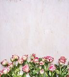 Border, spring shrub roses with leaves on the branches place for text  wooden rustic background top view Stock Photo