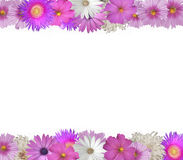 Border of Spring and Summer Flowers. Cheerful  border of pink and white flowers top and bottom Royalty Free Stock Photo