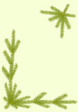 Border with spruce twigs. Royalty Free Stock Photography
