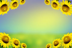 Border with sunflowers On background. Border with sunflowers On a blue and green background Stock Images
