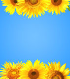 Border with sunflowers Stock Images