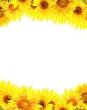 Border with sunflowers Stock Photography