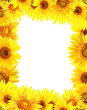 Border with sunflowers Royalty Free Stock Photos