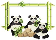 Border template with cute panda and bamboo. Illustration Royalty Free Stock Images