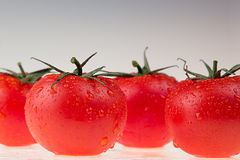 Border of tomato on a white background.  Macro. Texture. Gradient. Tomato pattern. Stock Photography