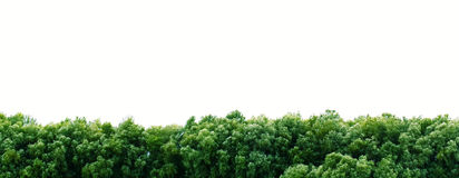 Border of trees on white Royalty Free Stock Photography
