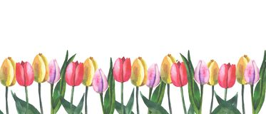 Border of tulips on white background with watercolor vector illustration