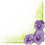 Border with  violet pansies Royalty Free Stock Image