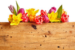 Border of vivid brightly colored spring flowers Stock Photo