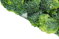Border of wet fresh green broccoli with water drops closeup on white background. Stock Image