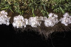 Border of white carnations with sprigs of boxwood on the interwoven straw lying  black plywood. Border of white carnations with evergreen sprigs of boxwood on Royalty Free Stock Photo