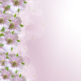 Border of white - pink flower. On purple - white background stock image