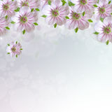 Border of white - pink  flowers Stock Photography