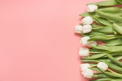 Border of white tulip on millennial pink. Top view with copy space. Border of white tulip on pastel millennial pink. Top view with copy space stock photos