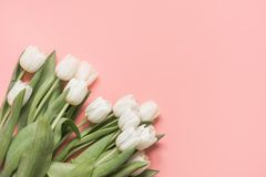 Border of white tulip on millennial pink. Top view with copy space. Border of white tulip on pastel millennial pink. Top view with copy space stock images