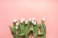 Border of white tulip on millennial pink. Top view with copy space. Border of white tulip on pastel millennial pink. Top view with copy space stock photography