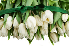 Border  of white  tulips Stock Images