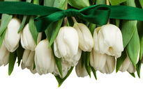 Border  of white  tulips with green bow Stock Images