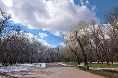 Border between winter and spring, left snow right green grass under trees Stock Image