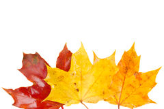 Border of yellow, orange  and red fall leaves Royalty Free Stock Image