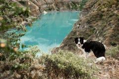 Bordercollie que camina en el barranco alrededor del lago foto de archivo