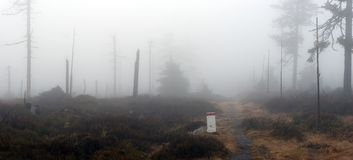 Borderline Bollard Along Footpath in Foggy Forest Stock Photography