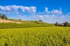 Bordeux vingård i helgonet Emillion Arkivfoton