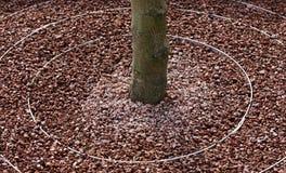 Bordi circolari dell'albero immagini stock
