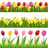 Bordi del fiore Immagine Stock