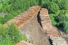 Bordi di legno, tronchi della cabina di ceppo delle conifere, vista aerea superiore fotografia stock libera da diritti