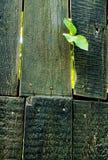 Bordi scuri con una foglia verde Fotografia Stock