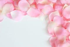 Bordo 3 del petalo di Rosa Fotografia Stock Libera da Diritti