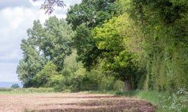Bordo antico britannico del terreno boscoso che intesta terreno arabile fotografia stock libera da diritti