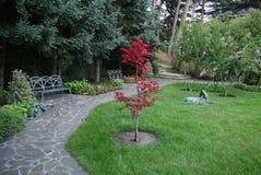 Bordo avermelhado brilhante em um jardim verde no fundo do abeto azul fotografia de stock royalty free