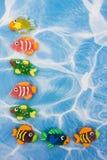 Bordo Colourful dei pesci Fotografia Stock