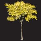 Bordo com folhas amarelas Imagem de Stock