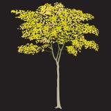 Bordo com folhas amarelas Fotos de Stock
