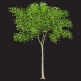 Bordo com folhas verdes Fotografia de Stock Royalty Free