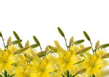 Bordo con i gigli gialli Fotografia Stock